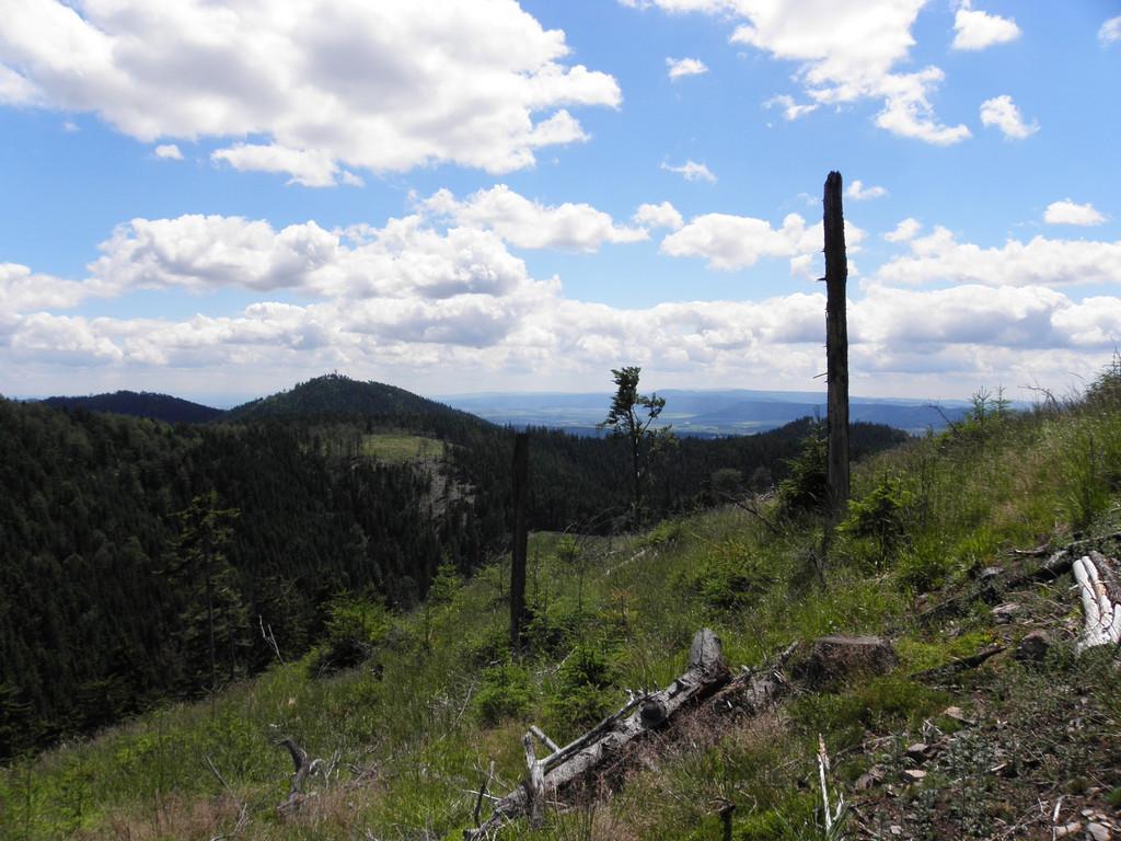 Clearing in Góry Suche