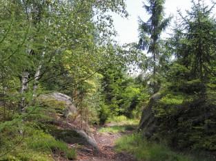 Droga na Kamienne Grzyby